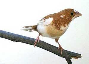 Hướng dẫn một số kinh nghiệm mua chim cảnh