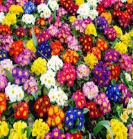 kış-çiçekleri-çuha