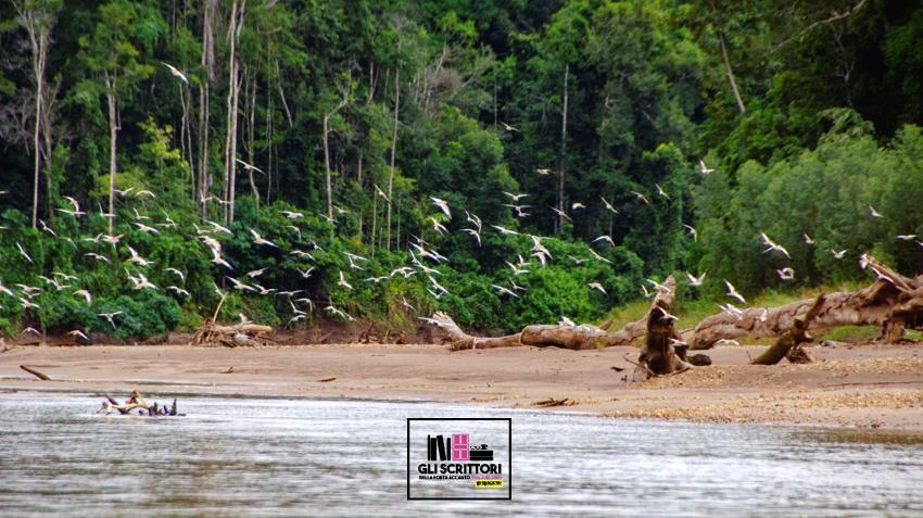 Viaggio in Amazzonia: il fiume Manu, tra giaguari, caimani e indigeni Matsigenka