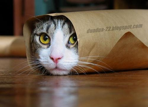 foto gambar kucing lucu