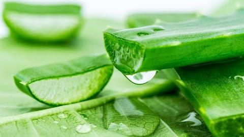 Ezek a leghatékonyabb gyógynövények fájdalom, gyulladás és fertőzések ellen