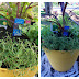 Mother's Day Gift Idea: Tomato & Herb Garden