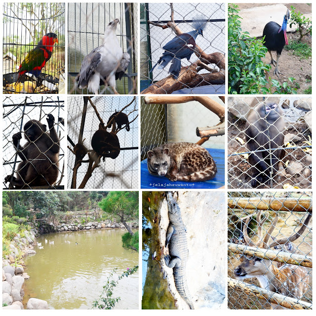 Mini Zoo Malino Highland || JelajahSuwanto