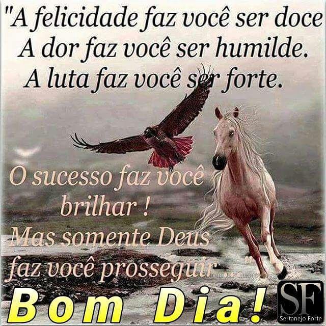 Blog Do Zé Lopes Frase Do Dia