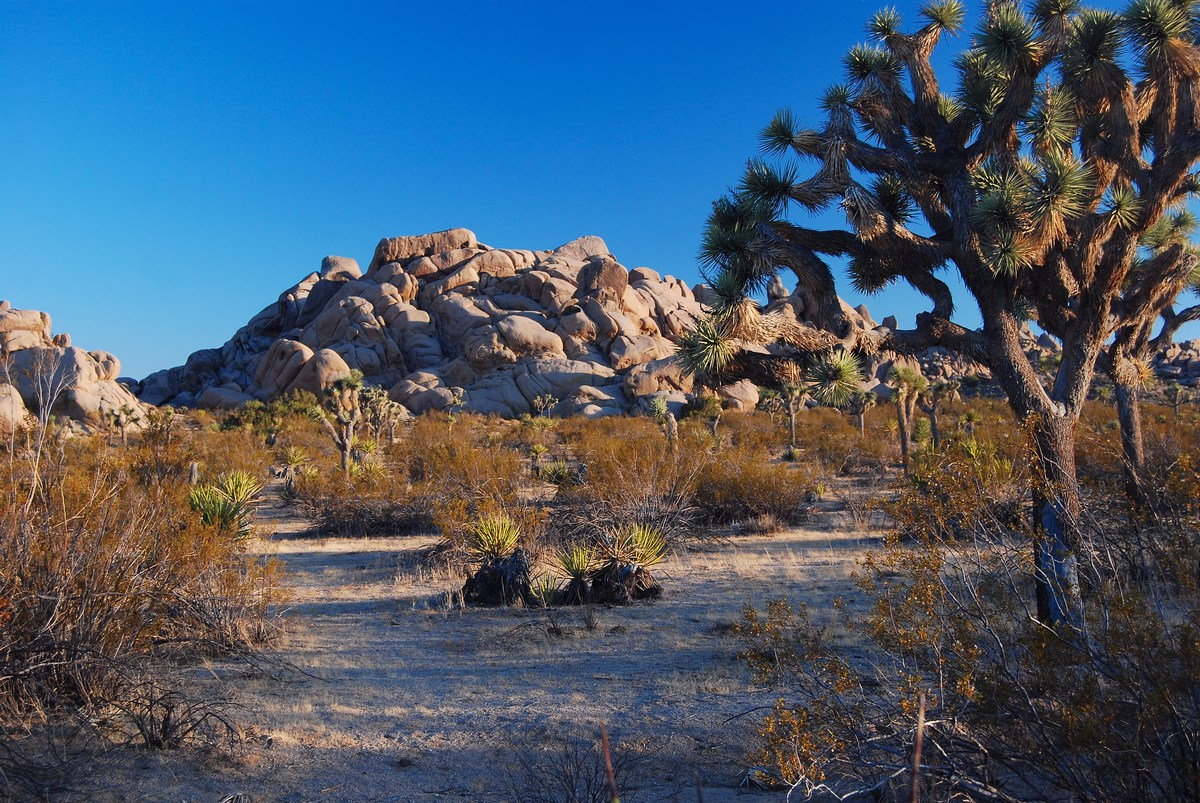 parc national de Joshua Tree