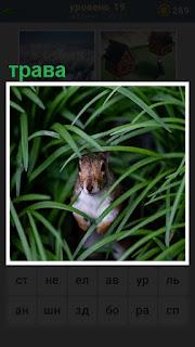 в густой траве сидит зверек похожий на кролика
