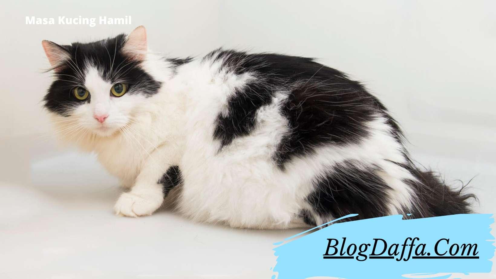 Berapa lama kucing hamil