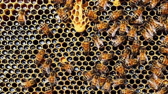 """Científicos desmontan el mito del """"apocalipsis"""" de las abejas"""