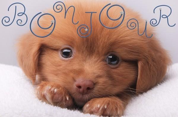 image d 39 amour petit chien qui vous envoie un bonjour. Black Bedroom Furniture Sets. Home Design Ideas