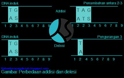 Mutasi merupakan proses perubahan kesatuan kimia yang bersifat tetap SOAL DAN JAWABAN TENTANG MUTASI, JENIS, DAN PENYEBABNYA