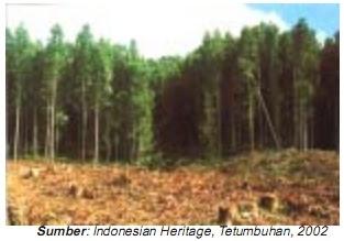 Tumbuhan Langka di Indonesia