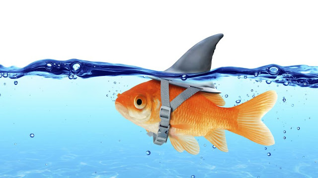 Poker fish lose their money 5 times faster than the regulars.