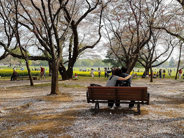看著櫻花被風吹落,有種感性在…