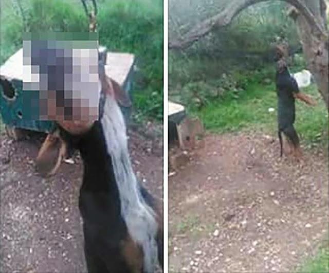 Ηγουμενίτσα: ΣΟΚ Βρήκε τον σκύλο του κρεμασμένο σε δέντρο (+ΦΩΤΟ)
