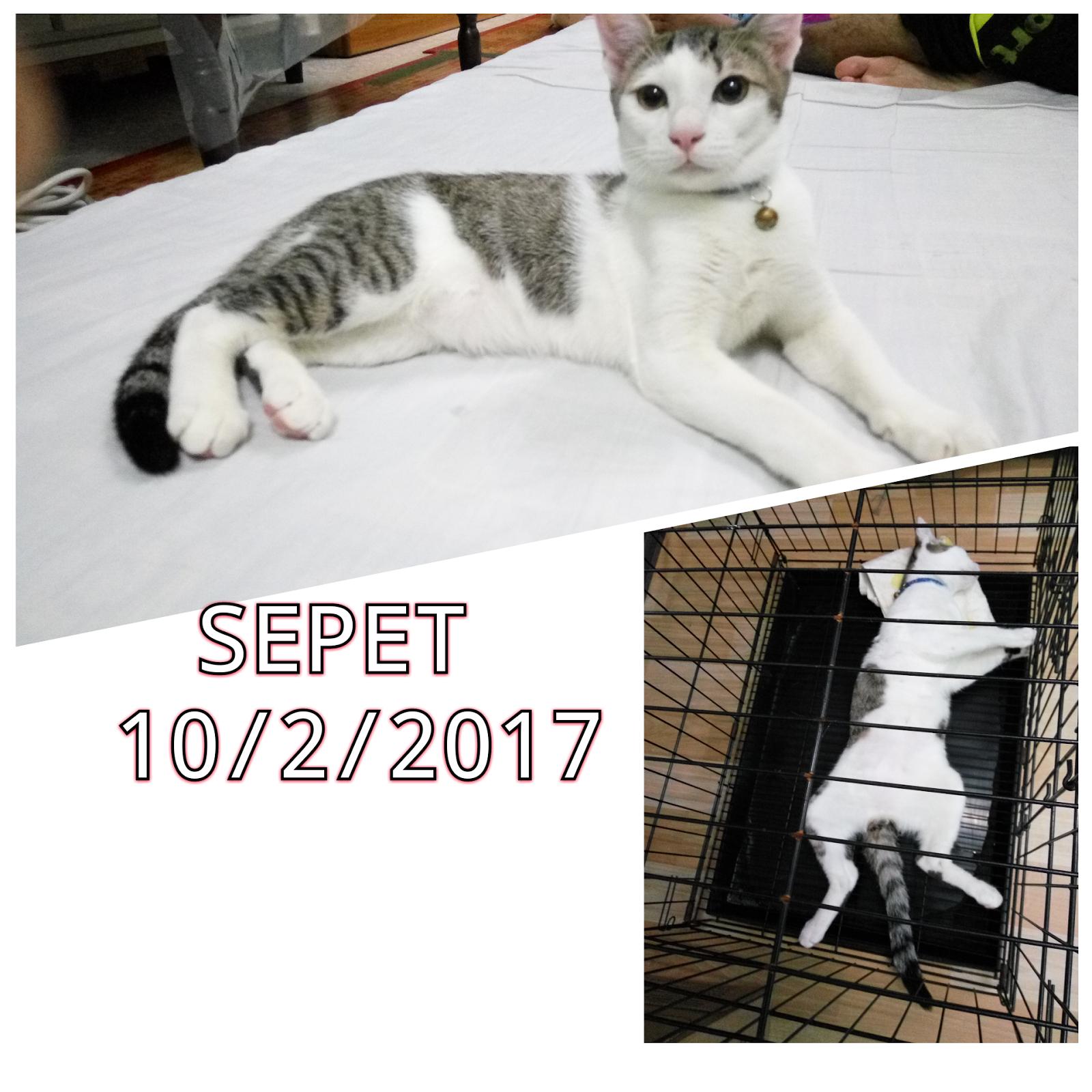 Corat Coret Nusha Kucing Ke 23 Dimandulkan Sepet