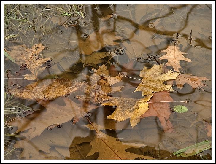 Resultado de imagen para lluvia de otoño
