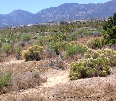 Southern Antelope Valley High Desert to the San Gabriel Mountains by Ruth Sandra Sperling, Photographer