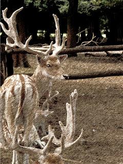 Cervos do Zoo de Luján