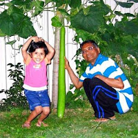 Very Long Bottle Gourd Grown, 1.23 m long