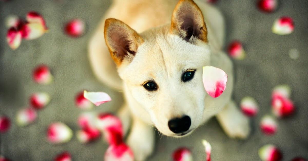 WALLPAPER ANDROID  IPHONE Wallpaper Anjing Lucu