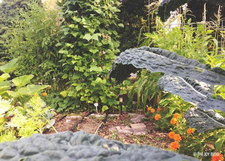 Backyard Veggie Garden // Veggie Garden Updates: Mid Summer 2018 | www.thejoyblog.net