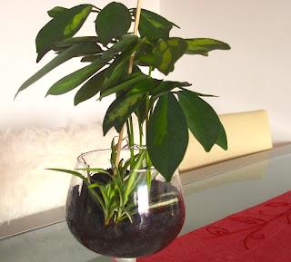 Las plantas de interior me ayudan a reciclar tazas o copas
