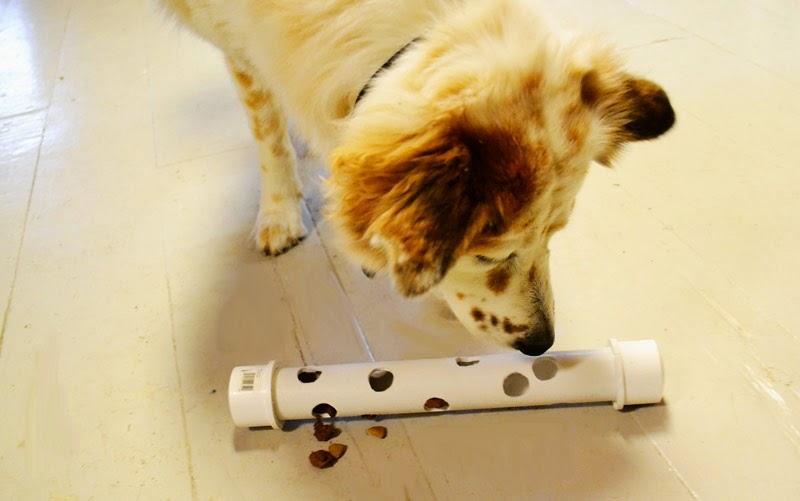 Resultado de imagen para tubos de carton agujeros perros