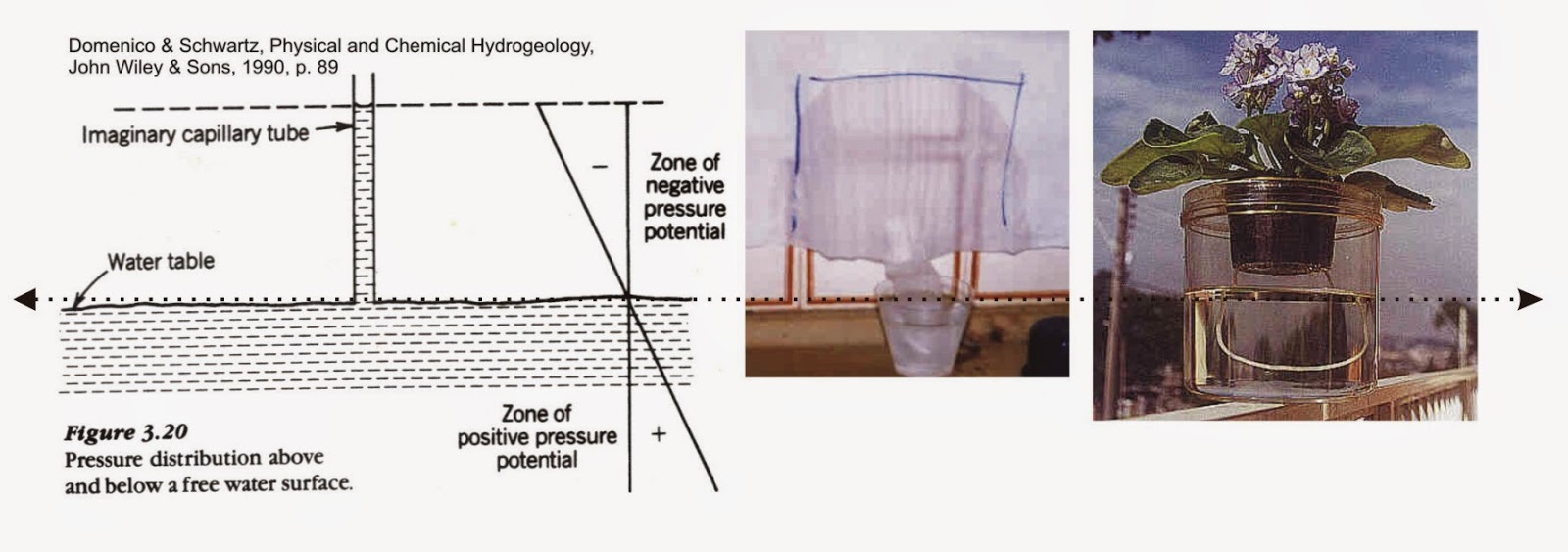 10c1e81643 In the cup, water in the surface has zero hydraulic pressure (dashed line),  becoming positive downward as the increasing weight of a vertical column of  ...