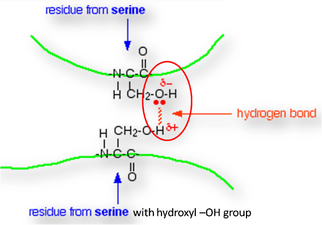 how is Hydrogen bond formed in protein