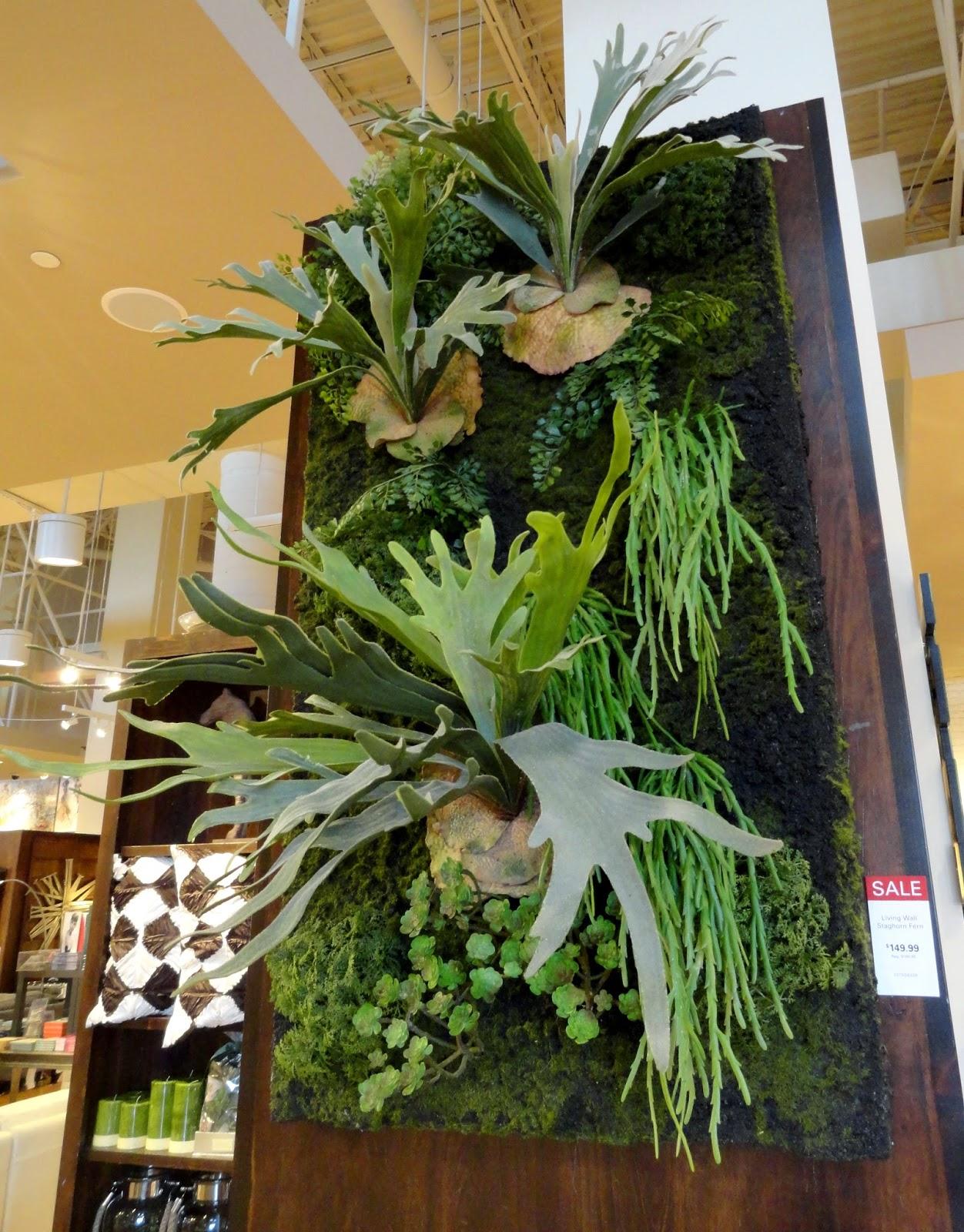 Danger Garden Low Light Succulents