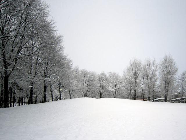 公園の木立