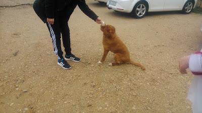 Experiencia canina Hospedería ballestero