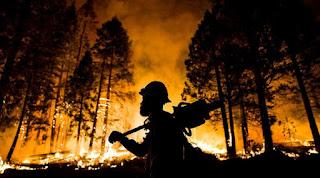info kebakaran hutan