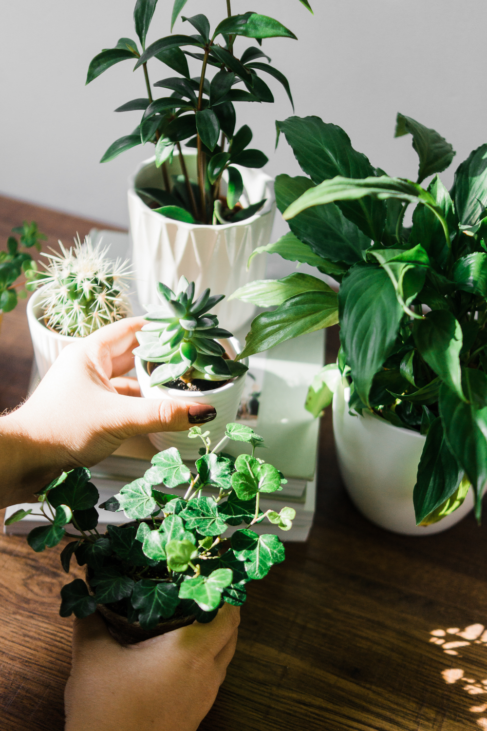 Beginner's-guide-to-houseplants-Barely-There-Beauty-blog-lifestyle-photography