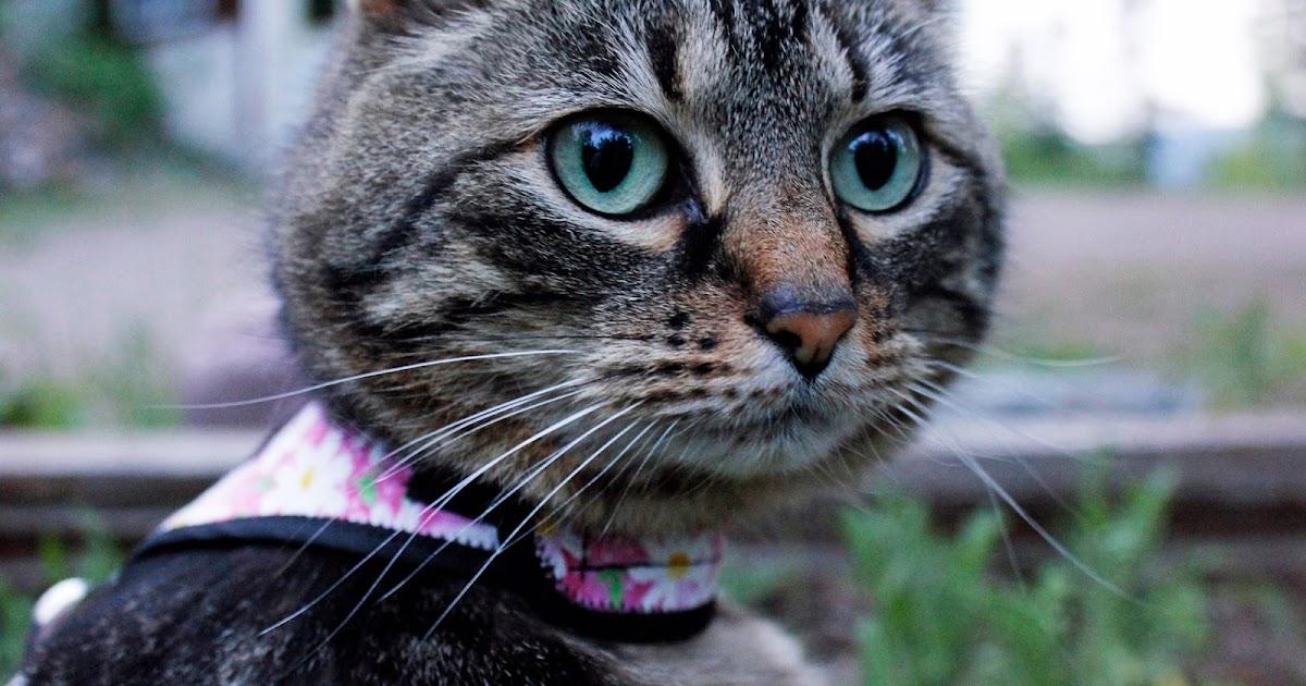 petsmart cat scratching post