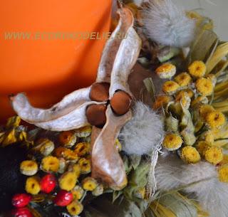 Натуральный природный материал ирис болотный