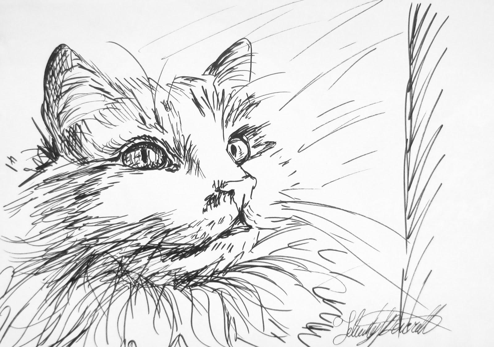 Felicity Deverell: Ink Pen Sketches #41- 44