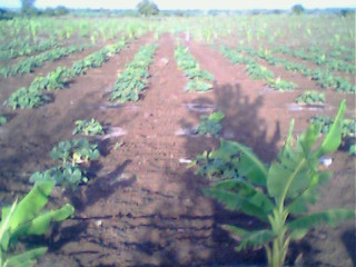 Set up your own AGRICULTURE FARM