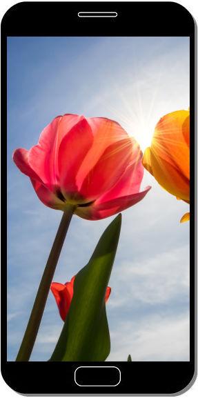 Tulips Blossom - Fond d'Écran en FHD pour Mobile