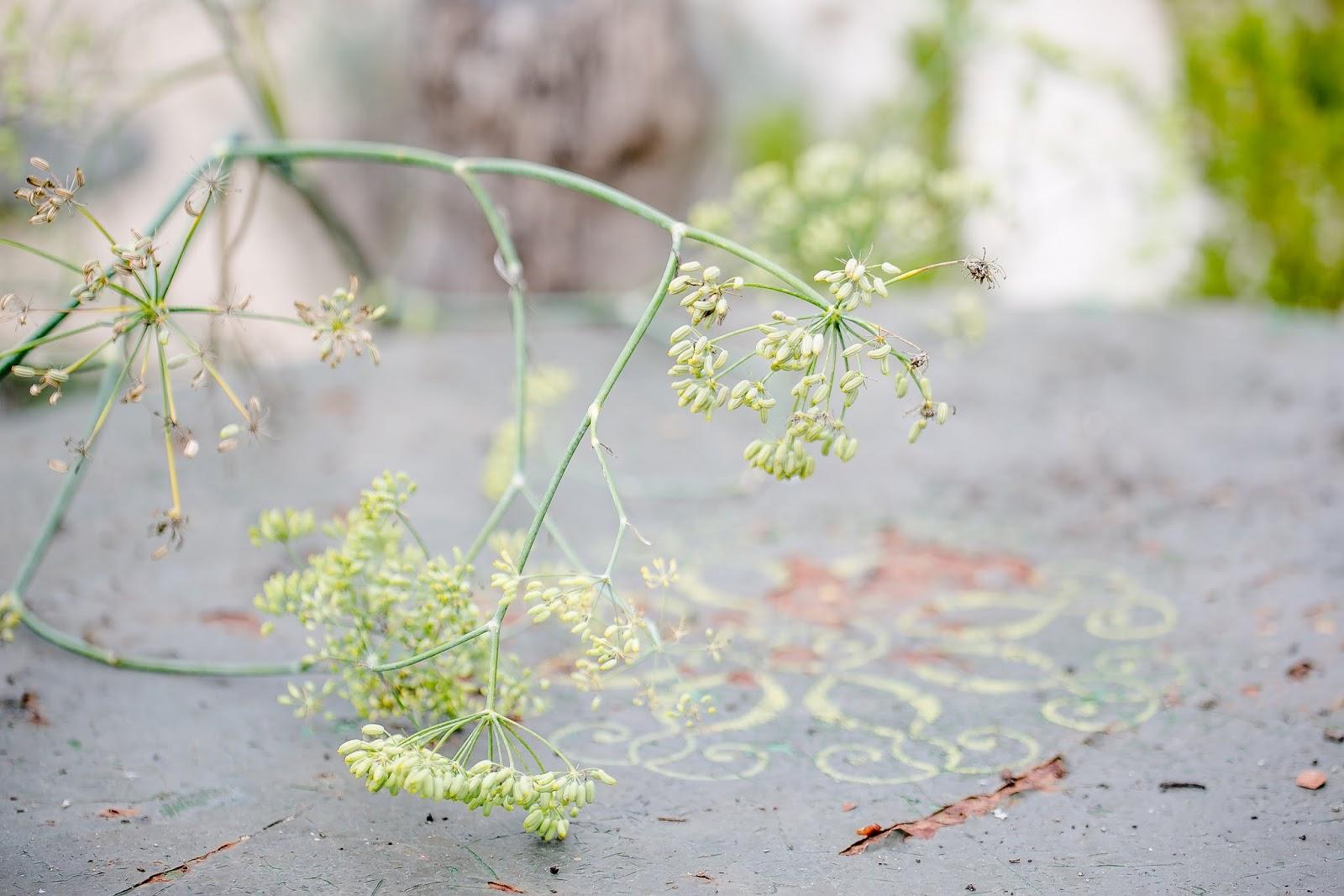 Staudengärtnerei Gaissmayer Illertissen herbst in der staudengärtnerei gaissmayer oder friday flowerday