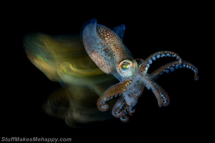 Underwater Photography - Underwater Photographer of The Year 2019