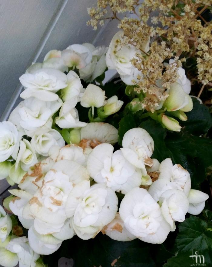valkoiset kukat ja kuihtuvat kukat