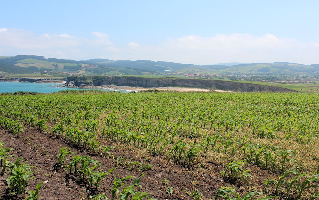 Playa de Langre. Acantilados de Ribamontán al Mar. Cantabria