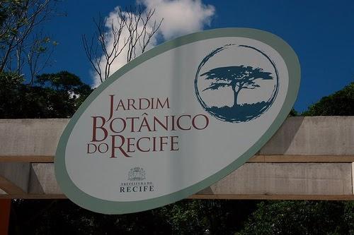 ipe de jardim botânico:ORQUIDÁRIO DOS OLIVEIRA: ORQUIDÁRIO DO JARDIM BOTÂNICO DO RECIFE