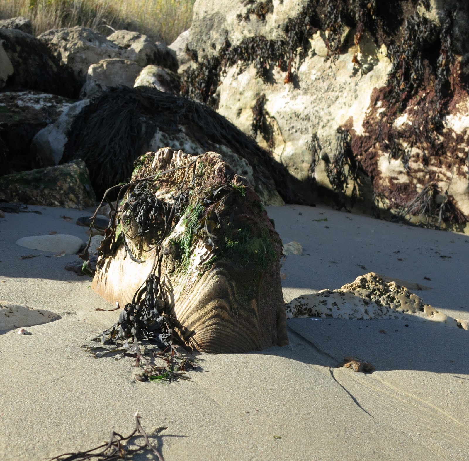 Remains of wooden post, draped in seaweed, looking like fish.