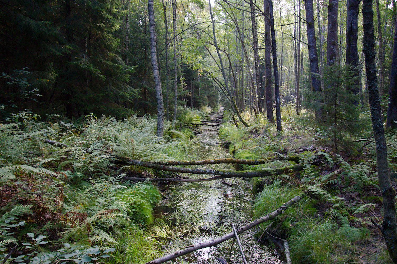 Kaunis puro Meikonkierroksen varrella