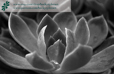 Echeveria, Macro Photography