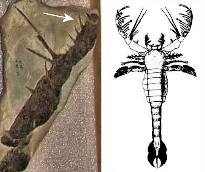 ordovician skorpions