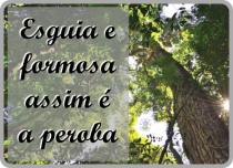https://silenimachado.blogspot.com/2019/03/peroba.html