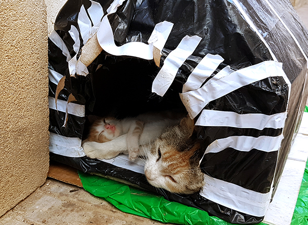 cat house essaouira